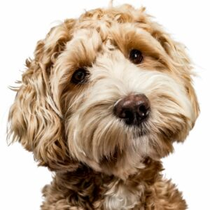 Leaving plans for a pet in a will should be vital to any pet parent.