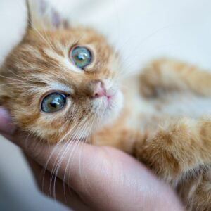 Caring for a pet after one's own passing is as easy as including them in their will.